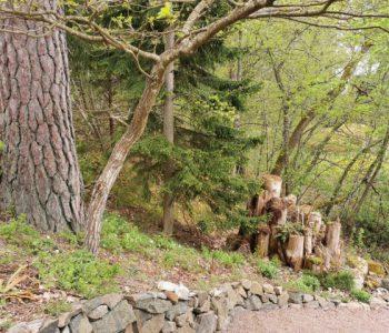 metsapuutarha