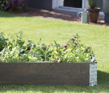 nyt-haaveillaan-syotavien-kasvien-kasvattamisesta