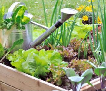 vastuullista-puutarhanhoitoa